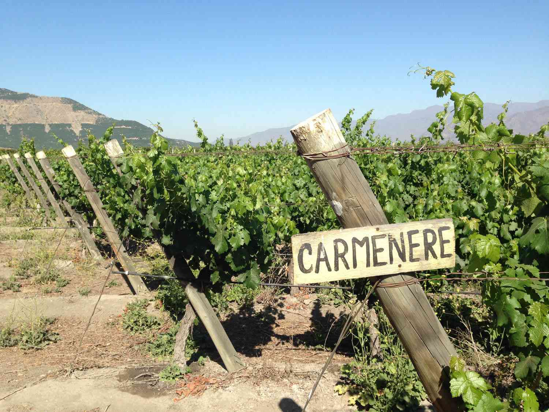20150625-chilean-wine-carmenere-aconcagua-valley-credit-jake-pippin.jpg