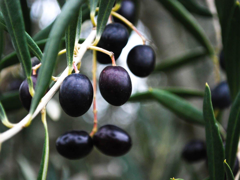 20140910-olives-flickr-alpha-5-.jpg