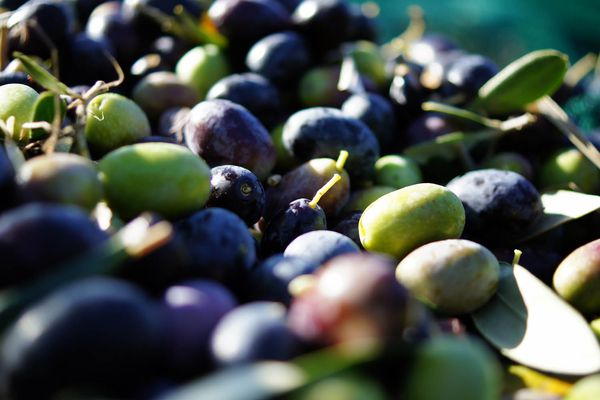 20140910-olives-flickr-daniel-coomber-8.jpg