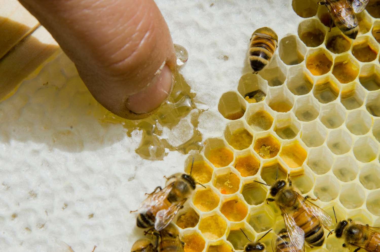 20140617-honey-bees-max-falkowitz-wax-1.jpg