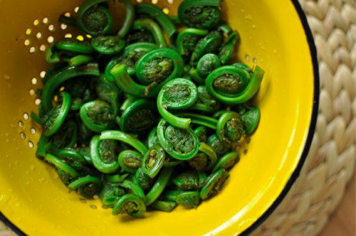 04232012-203131-washed-ferns-1.jpg