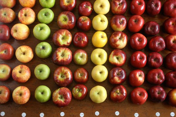 An array of apples in various types and colors
