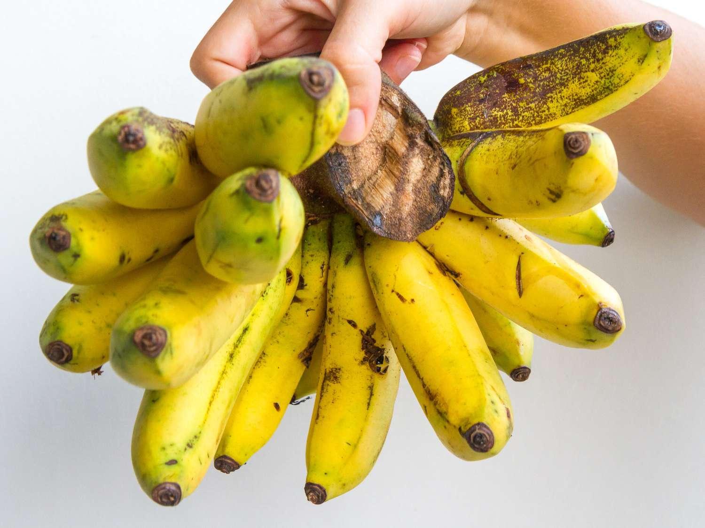 Gros Michel variety of bananas
