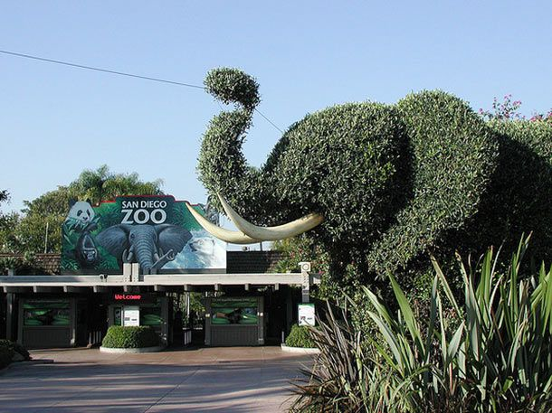 271914-where-to-eat-near-san-diego-zoo.jpg