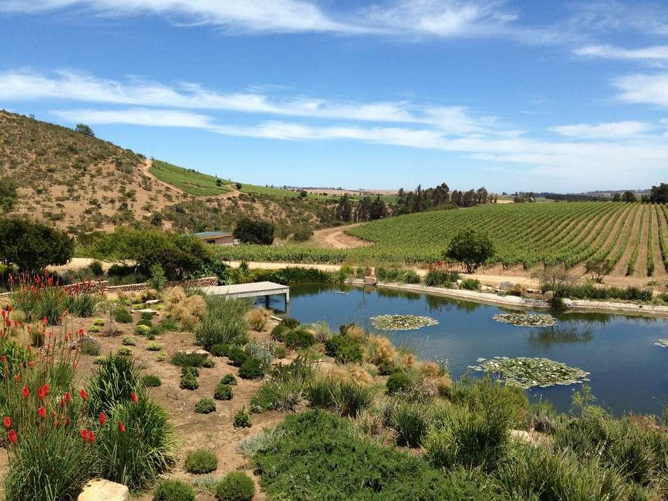 20150625-chilean-wine-leyda-jake-pippin.jpg