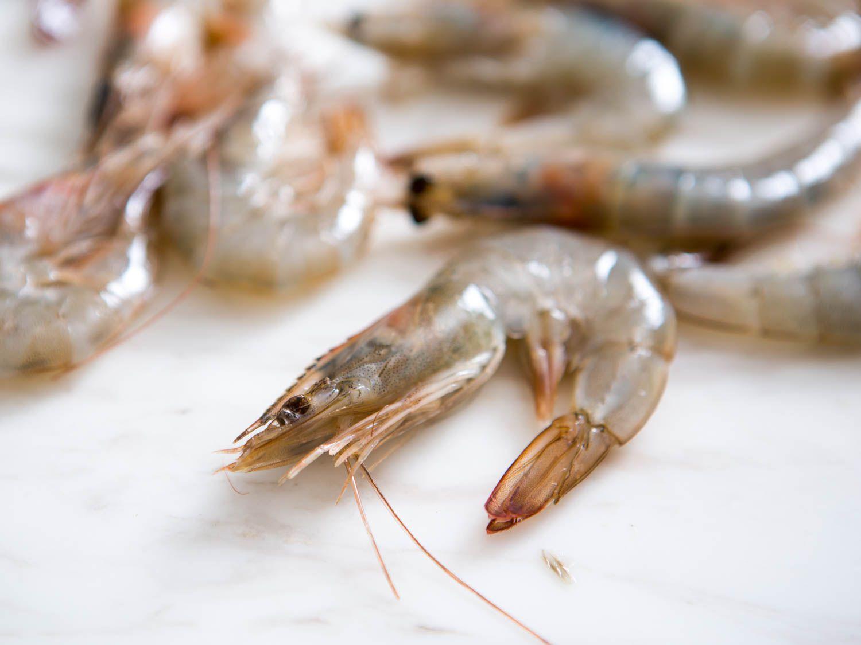 20150806-shrimp-guide-vicky-wasikx-9.jpg