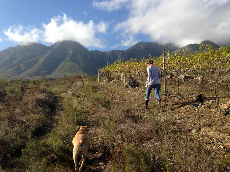 20150405-south-africa-samantha-okeefe-lismore-estate-julia-van-der-vink.jpg