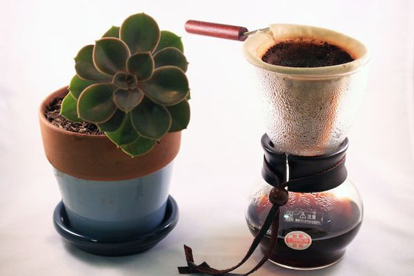 102611-176508-coffee-how-to-brew-woodneck.jpg
