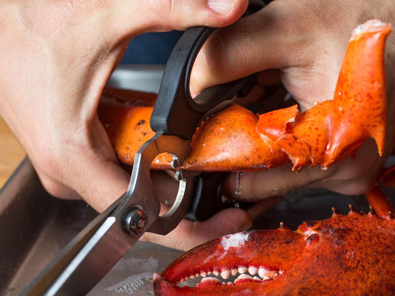 20141201-kitchen-shears-uses-vicky-wasik-9.jpg