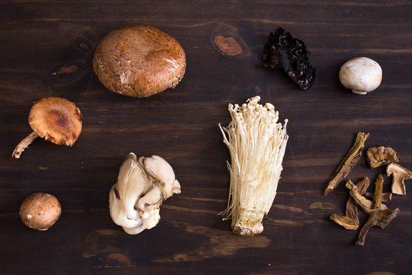 20150527-mushroom-guide-vicky-wasik-13.jpg