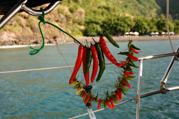 20150615-cooking-on-a-boat-peppers-drying1-lauren-sloss.jpg