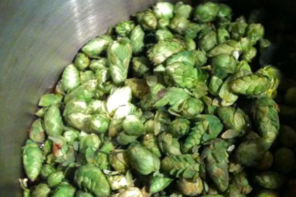 20110912-169823-fresh-hops.jpg