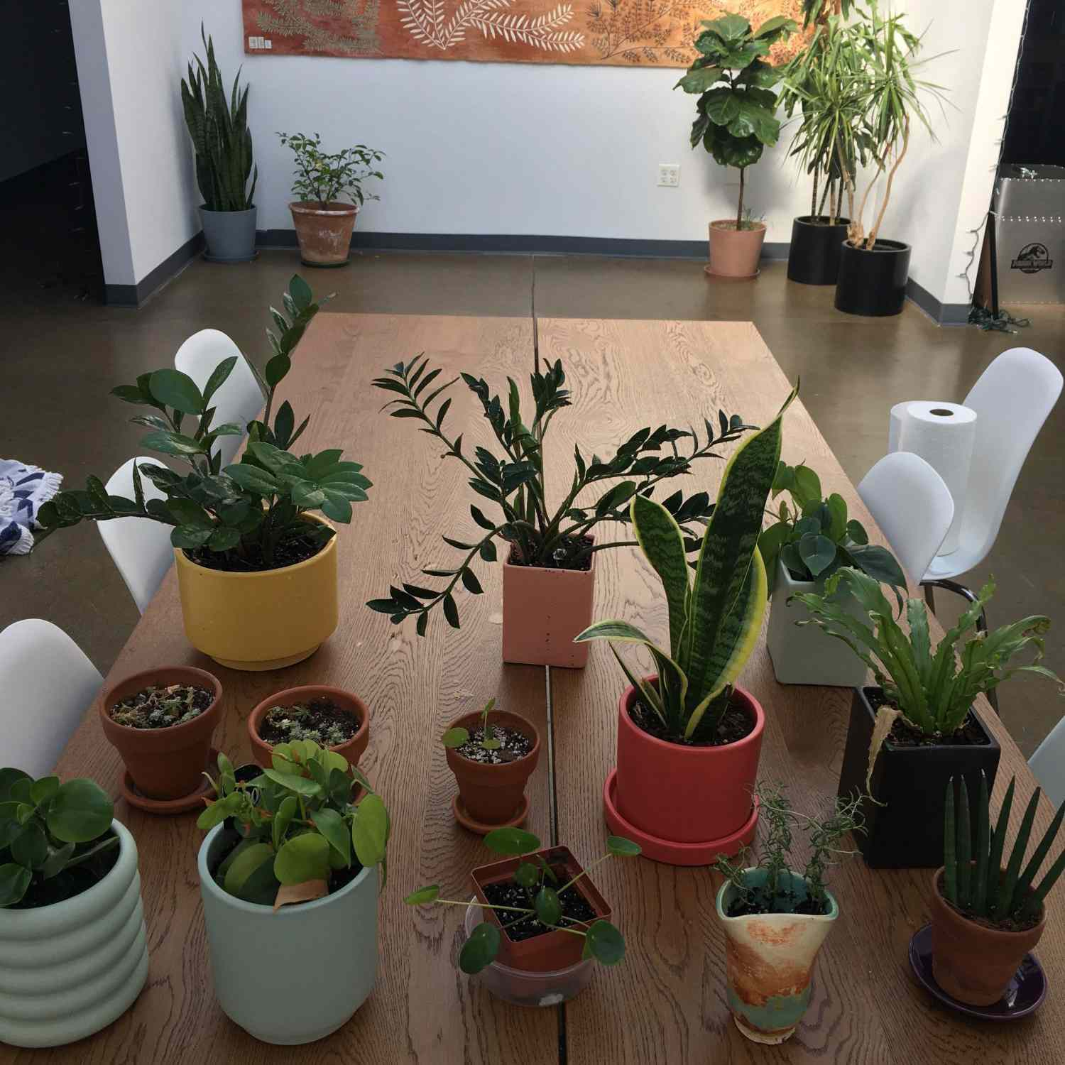 Serious Eats office plants grouped up on a table