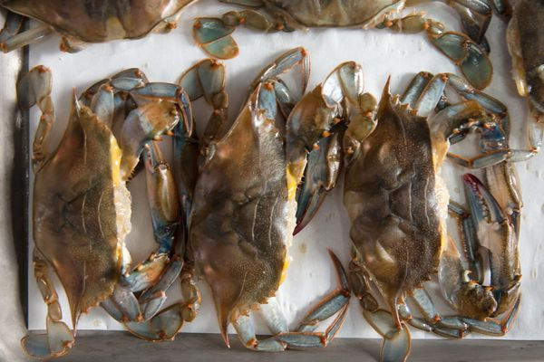 20170602-fried-soft-shell-crab-sandwich-vicky-wasik-1-2.jpg