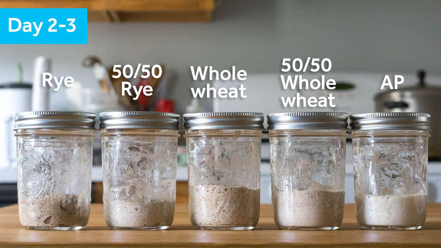 Five sourdough starter samples on Day 2, showing some swelling