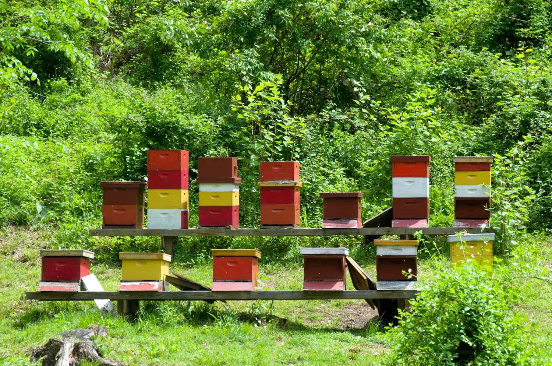20140617-honey-bees-max-falkowitz-hives.jpg