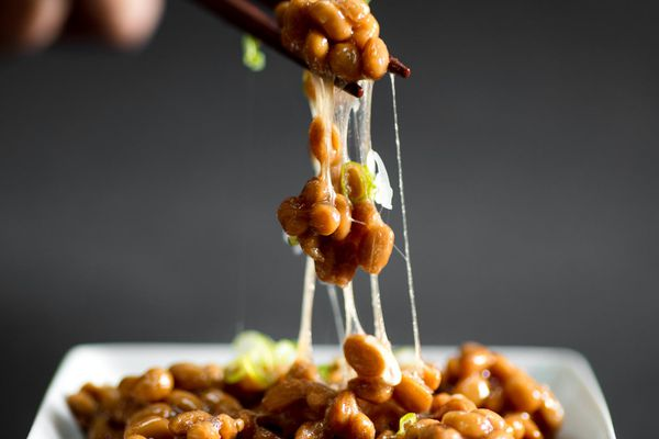 Chopsticks holding natto over a square plate of natto, fermented soybeans that are a common breakfast in Japan..