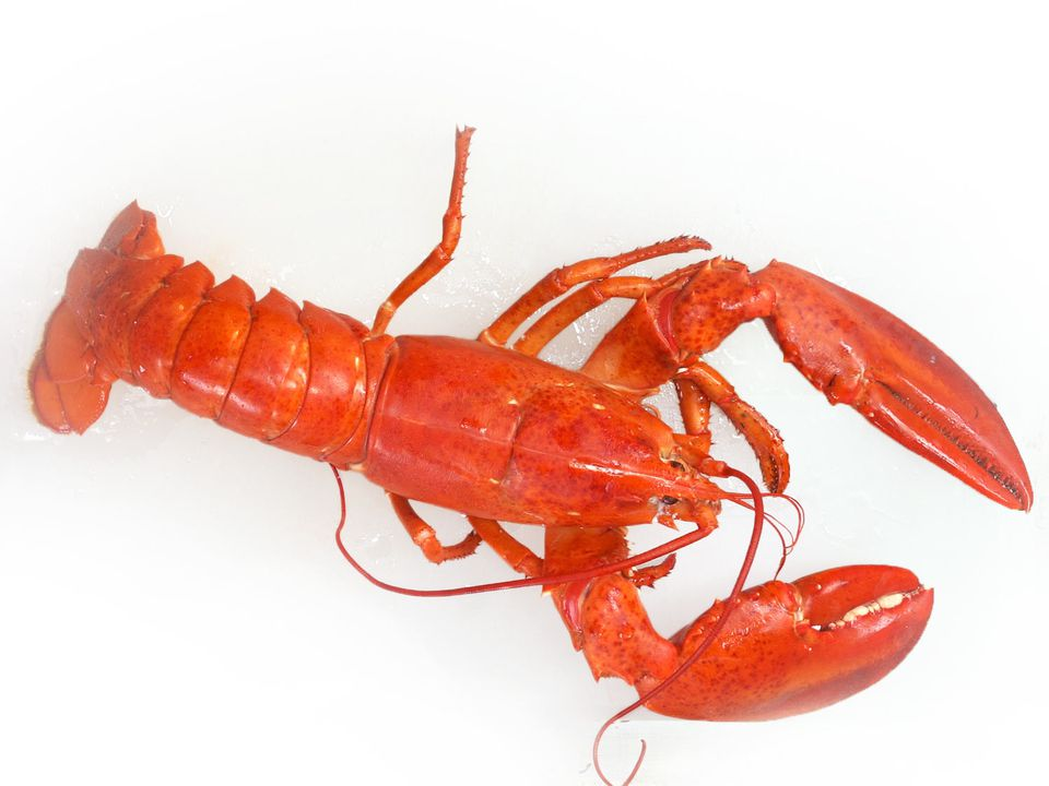 20170425-whole-lobster-vicky-wasik.jpg