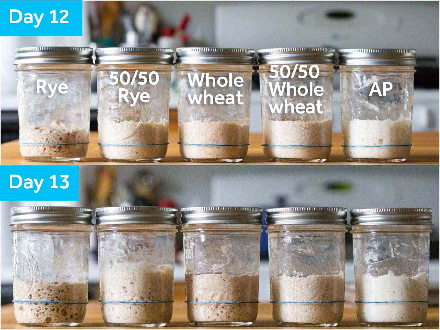 Comparative shots of the sourdough starters on days 12 and 13