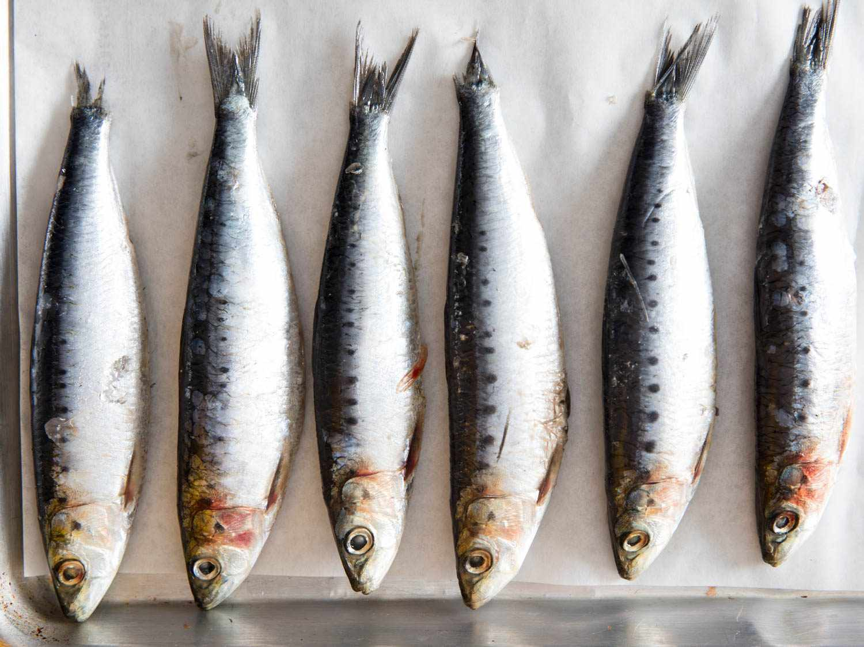 Fresh sardines lying side by side.