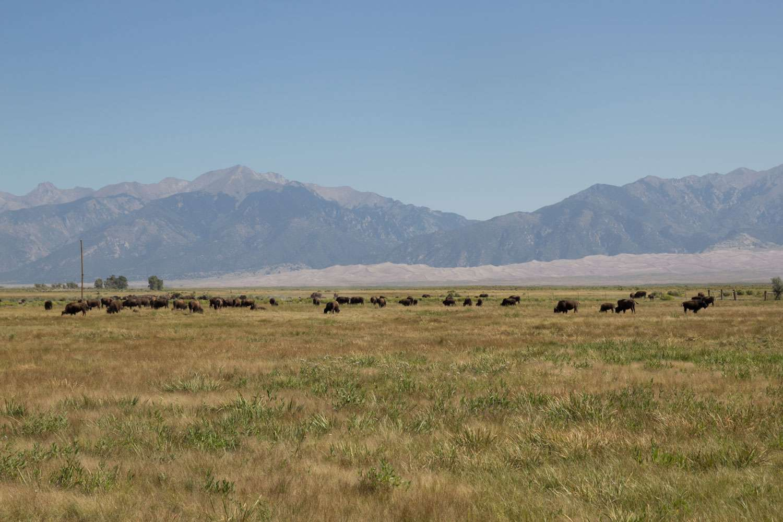20131031-herding-in-colorado.jpg