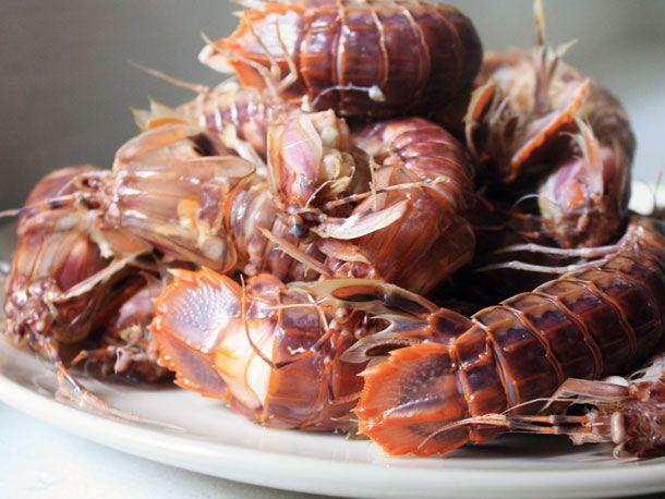 20101005-mantisshrimp-primary.jpg