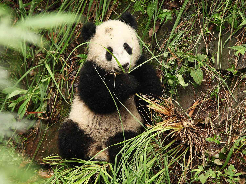 20140625-pandas-18.JPG