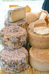 20090423-gina-cheese2.jpg
