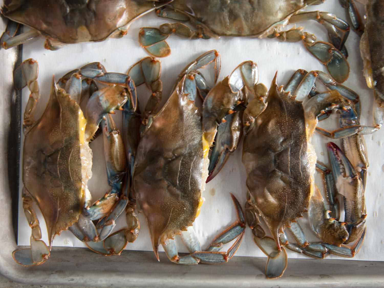 20170602-fried-soft-shell-crab-sandwich-vicky-wasik-3.jpg