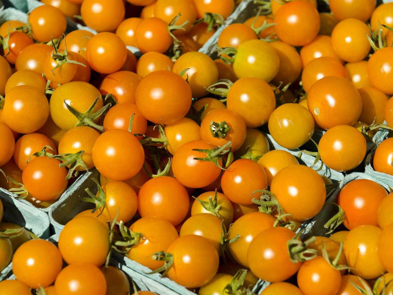 20150622-tomato-guide-sungold-shutterstock.jpg