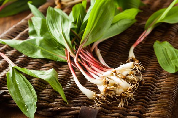 A bunch of ramps on top of a wicker basket.
