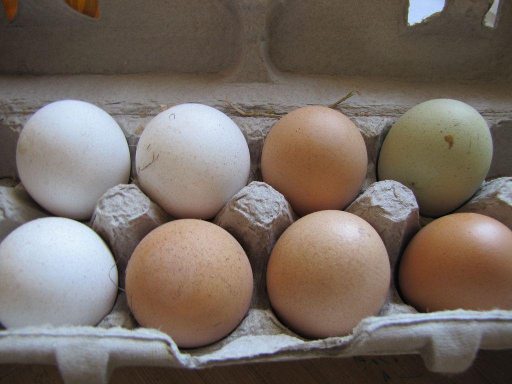043014-cathyerway-eggs-heritageeggs.jpg