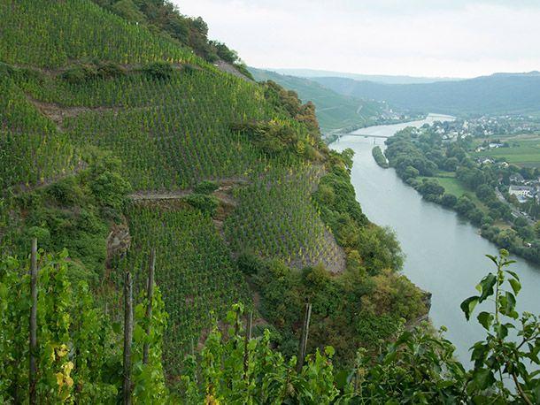 urziger wurtzgarten germany vineyard