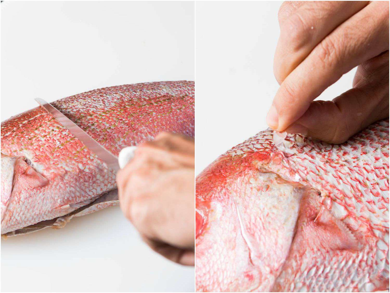 20150922-how-to-fillet-fish-descaling.jpg