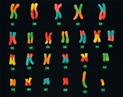 20091023-gummywormchromosomes.jpg