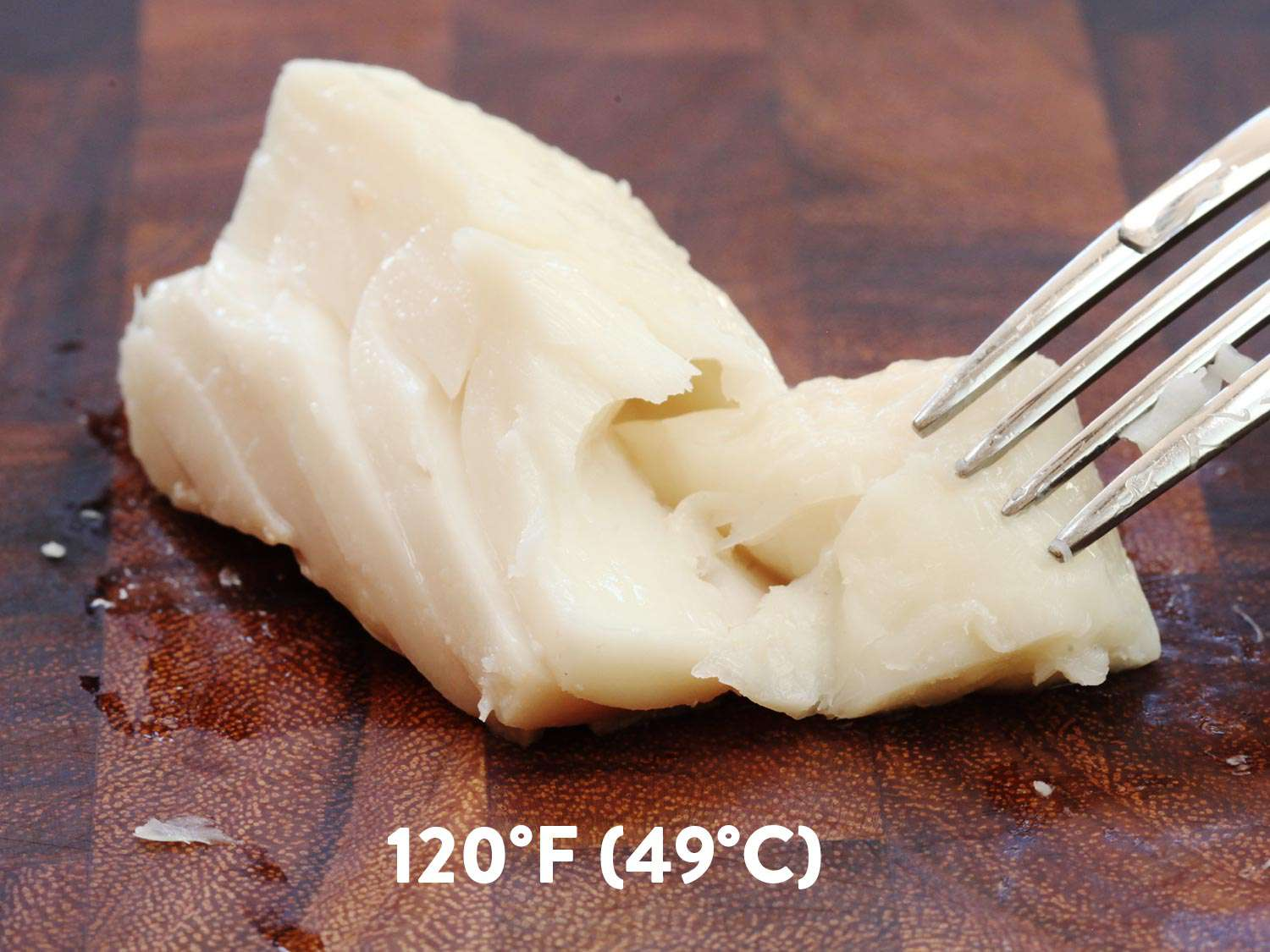 A piece of sous vide halibut cooked to 120 degrees F. It's being flaked with a fork.