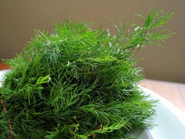 20110505-149845-dill-weed-lg.JPG