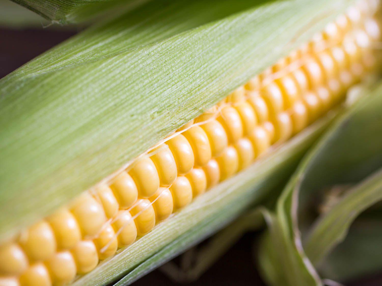 20150802-corn-vicky-wasik-1
