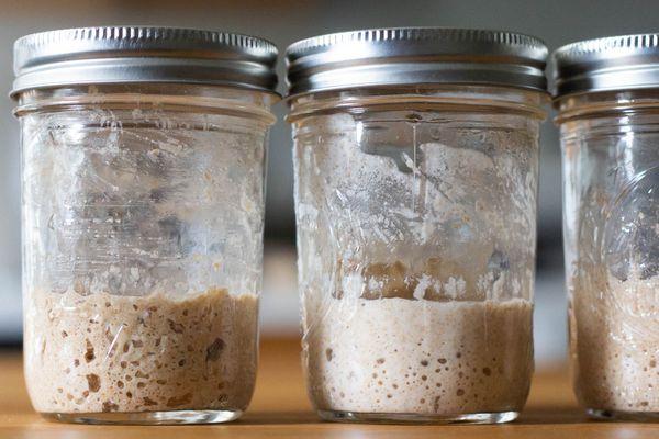 Bubbly sourdough starters in glass jam jars