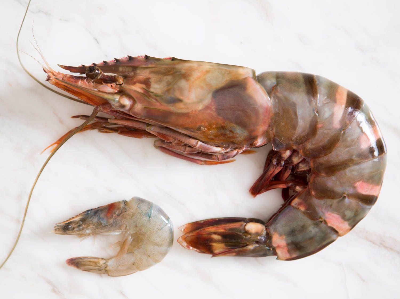 20150806-shrimp-guide-vicky-wasikx-12.jpg