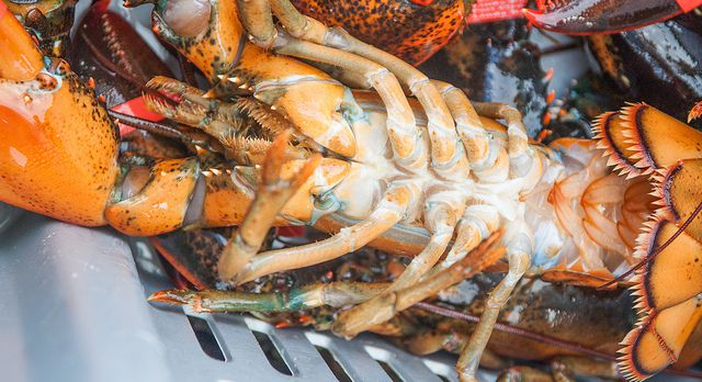 20130912-lobster-belly.jpg