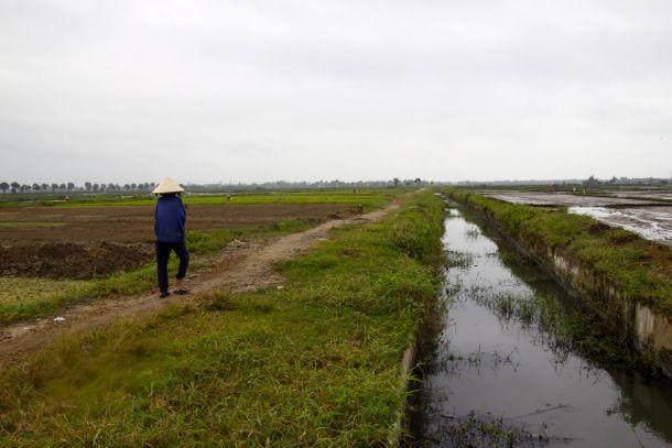 20130121-vietnam-rice.jpg