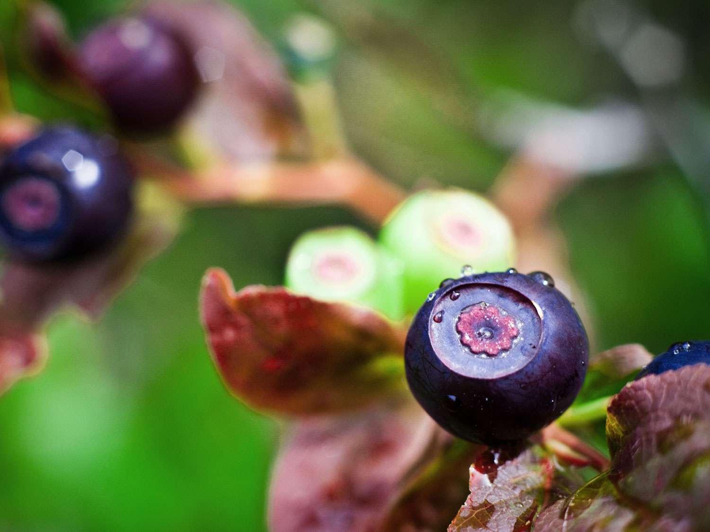 hucklberry-flickr-nomadic-lass.jpg