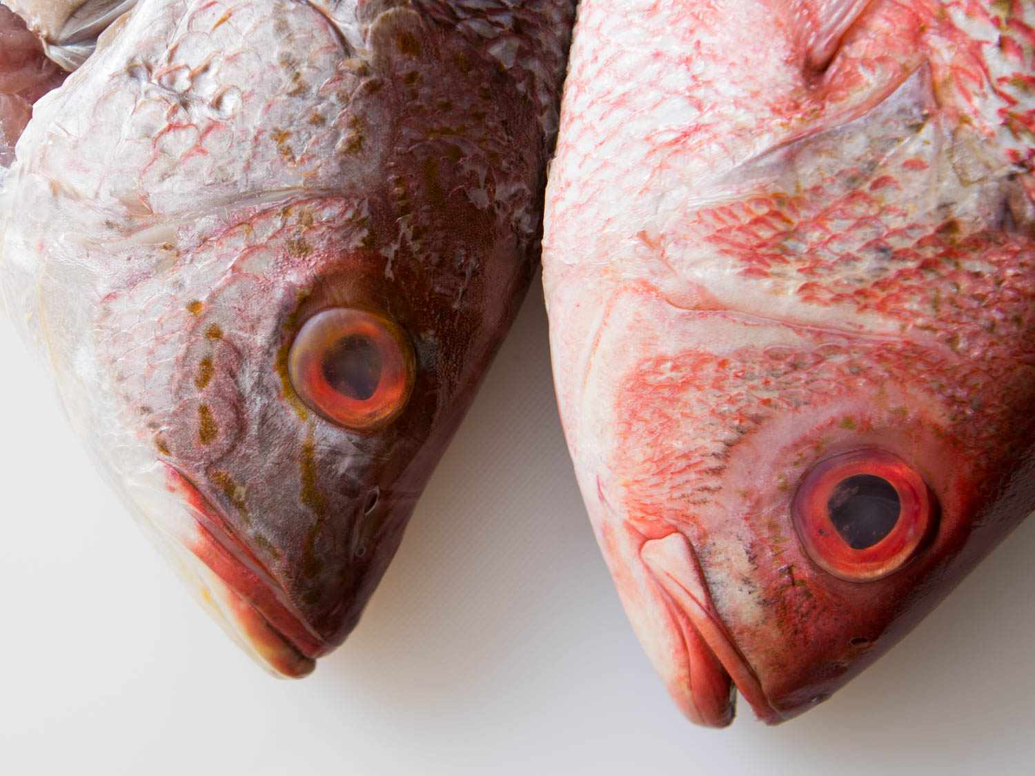20150922-how-to-fillet-fish-1.jpg