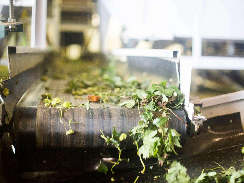 20140903-hop-farm-recleaner-rabi-abonour.jpg