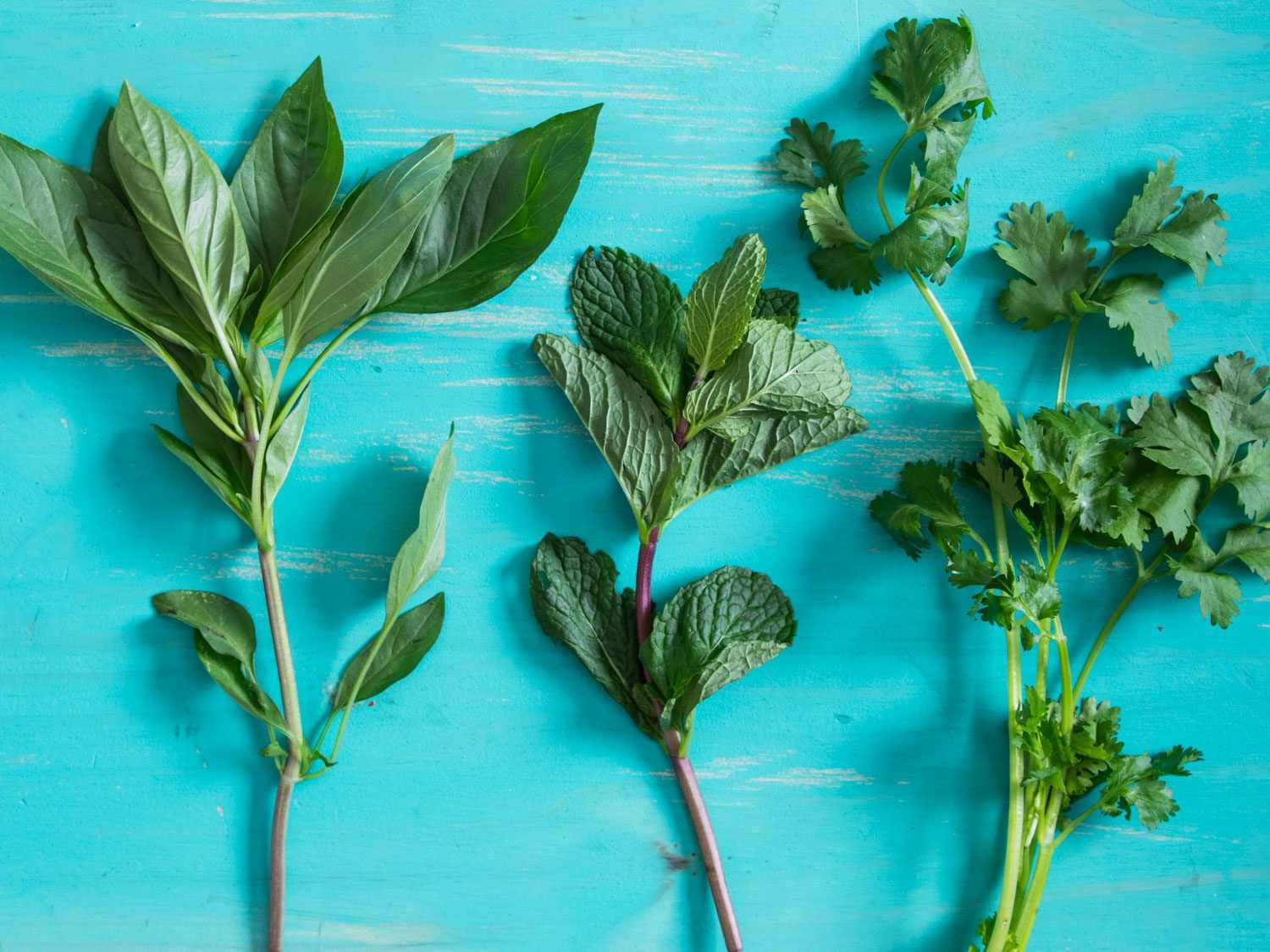 A variety of fresh herbs on a blue background