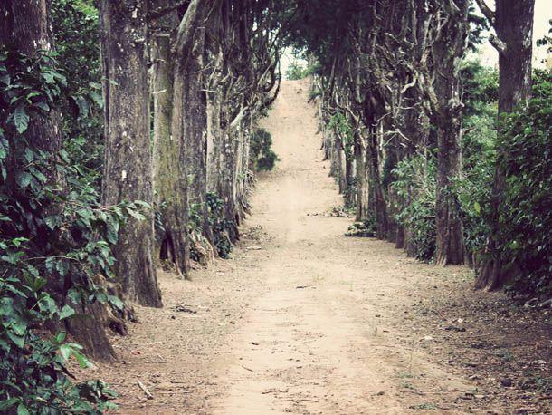 SE-coffee-shade-grown-landscape.jpg