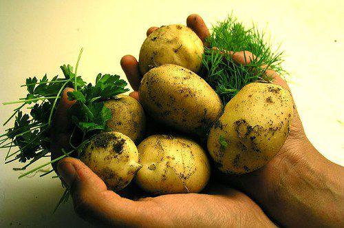 20081205potatoes.jpg