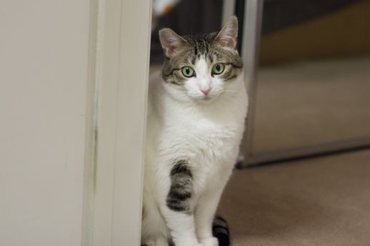 272674-munchie-meal-cat.jpg