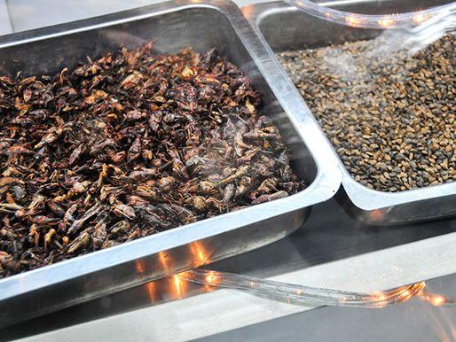 20130107-236094-mercado-san-juan-insects.jpg